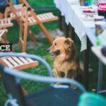 Kesän puutarhajuhlat
